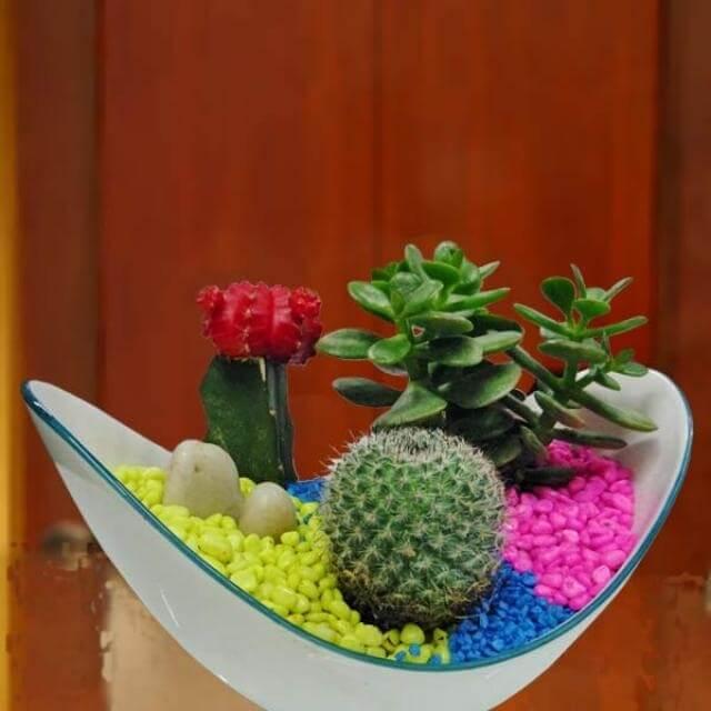 Cây xanh trang trí Đà Nẵng