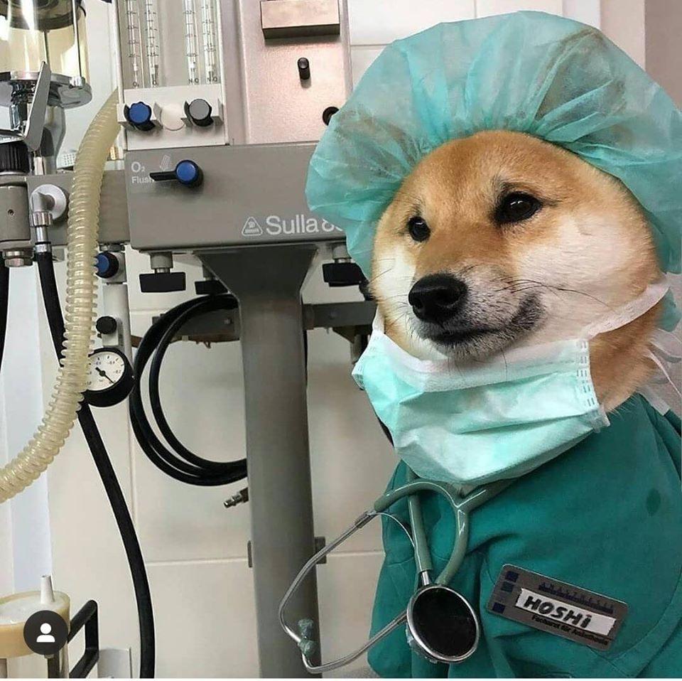 những phòng khám thú y Sài Gòn