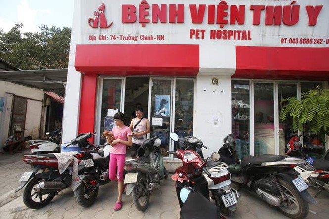 chuyên khám và chữa bệnh cho thú cưng