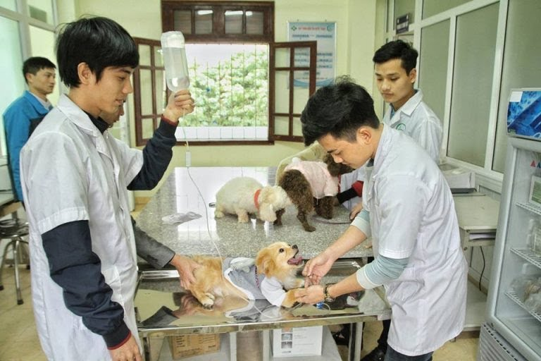 cơ sở khám và chữa bệnh cho vật ở Hà Nội