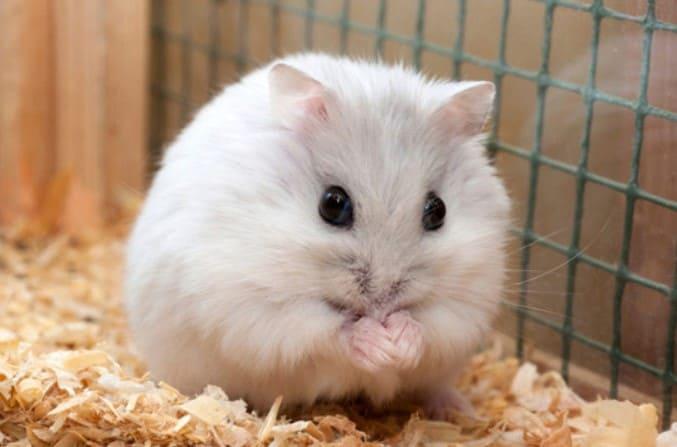 Bo, Shop Hamster Biên Hòa