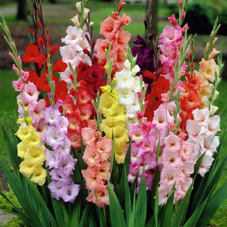 các loại hoa chưng ngày Tết